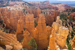 Navajoögla Bryce Canyon National Park Utah USA Royaltyfri Foto