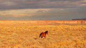 Navajo Horse Stock Images