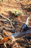 Navajo Krajowy zabytek fotografia royalty free
