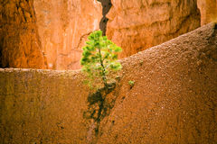 Navajo Loop Trail - Wall Street: Royalty Free Stock Photos