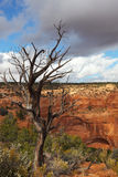 Navajo National Monument Stock Photo
