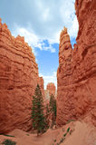 Navajo Trail - Bryce Canyon National Park Stock Photos