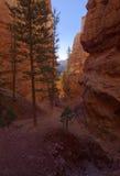 Navajo Trail Stock Image