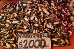 Navajvela. Navajelas at a fish market in Valdivia, Chile Royalty Free Stock Photo