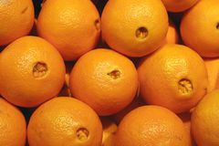 Naval Oranges Royalty Free Stock Images