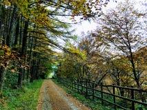 Navarratramite percorso di Verde Plazaola fotografie stock
