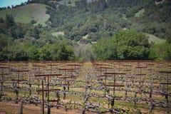 Navarro-Familien-Weinkellerei nahe Philo CA Stockbild
