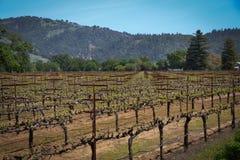 Navarro-Familien-Weinkellerei nahe Philo CA Stockfotos