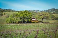 Navarro-Familien-Weinkellerei nahe Philo CA Lizenzfreie Stockbilder