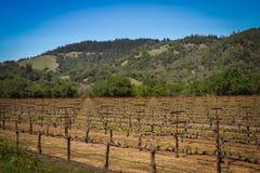 Navarro-Familien-Weinkellerei nahe Philo CA Stockbilder