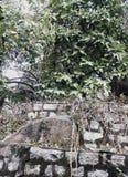nave stockbilder