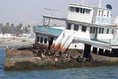 Nave abbandonata con i leoni di mare Immagine Stock Libera da Diritti