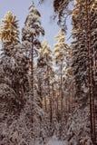 nave Arvoredo da floresta de uma floresta do inverno Imagem de Stock