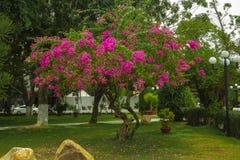 nave Baum Grün mit Blumen lizenzfreie stockfotografie