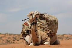 Nave del deserto Fotografia Stock Libera da Diritti