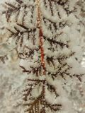 nave evergreen Fondo esposizione Inverno magia colorful fotografia stock