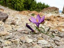 nave Flora van het Mediterrane gebied Bloemen royalty-vrije stock foto