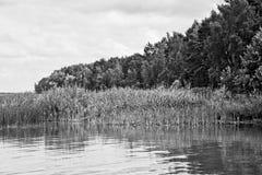 nave Foresta Fotografia Stock