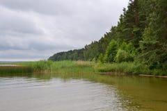 nave Foresta Fotografie Stock