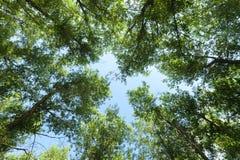 nave Foresta Fotografie Stock Libere da Diritti