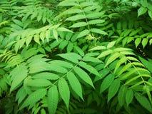 nave Heldere bladeren wildernis en Afrika groen gevaar royalty-vrije stock afbeeldingen