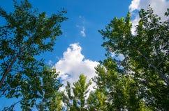 nave Mooie hemel door de bomen stock afbeelding