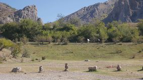nave Pferde auf dem Gebiet, den Bergen und dem blauen Himmel, schöne natürliche Herbstlandschaft stock video footage