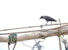 Nave Raven Fotografia Stock