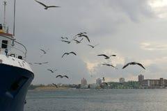 Nave y gaviotas - 2 Foto de archivo libre de regalías