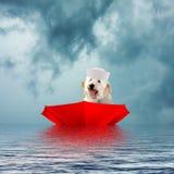Navegación del perro en paraguas rojo al revés Foto de archivo