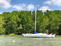 Navegue con los árboles del mangle a lo largo del agua del verde de la turquesa Imagenes de archivo