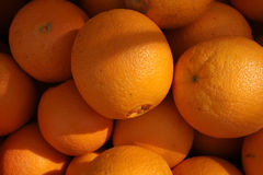 Navel orange, Citrus sinensis Royalty Free Stock Photos