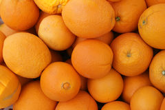 Navel orange, Citrus sinensis Stock Image