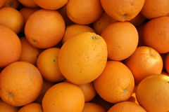 Navel orange, Citrus sinensis Stock Photography