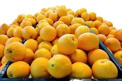 Navel Oranges on white background Royalty Free Stock Photos