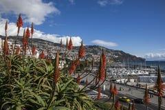 Navi, colline e fiori, Funchal, Madera Immagini Stock