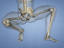 Navicular Bone, 3D Model Royalty Free Stock Images