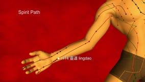 Heart Meridian, video, 3D Illustration stock video footage