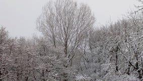 Navidad blanca fotos de archivo