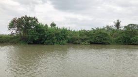 Navigação através da floresta úmida pelo riverbank no dia nebuloso A água de Brown é típica da cor tropical do rio em Ásia durant vídeos de arquivo