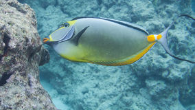 Navigando usando una presa d'aria con i pesci tropicali fotografie stock libere da diritti