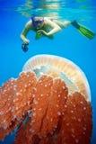 Navigando usando una presa d'aria con le meduse Fotografia Stock Libera da Diritti