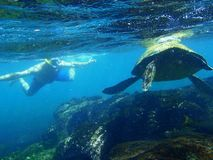 Navigando usando una presa d'aria con una tartaruga di mare fotografie stock libere da diritti