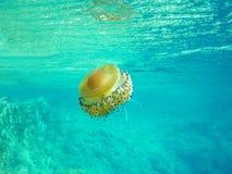 Navigare usando una presa d'aria - meduse Fotografia Stock Libera da Diritti