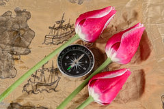 Navigation. Old dingy chart, compass and tulips Stock Image