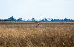 Navigation in the Okavango Delta Royalty Free Stock Photos