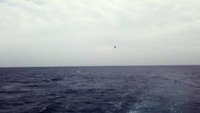 Navigazione dell'yacht sul mare marino aperto Barca di navigazione Video di navigazione da diporto Video di navigazione Navigazio video d archivio