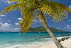 Navigazione della palma dell'isola Immagine Stock