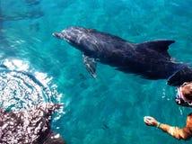 Naviguer au schnorchel avec des dauphins Image libre de droits