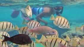 Naviguer au schnorchel avec les poissons tropicaux Photographie stock libre de droits